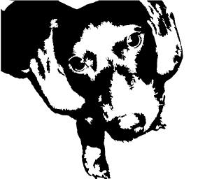 otto,the-weinerdog